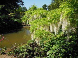 Gartenreise England 509